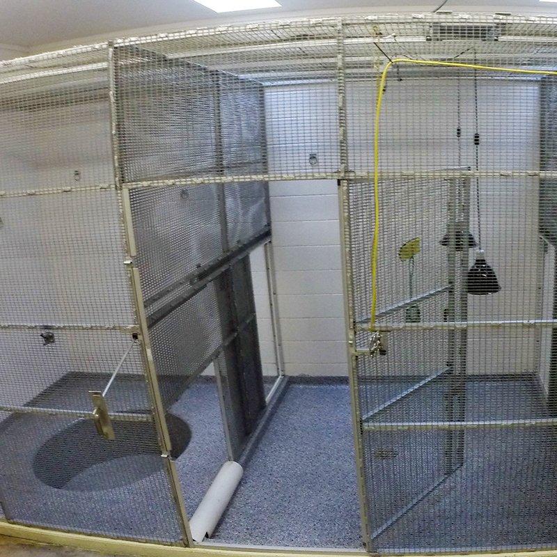 Zoo Veterinary Area Floor Coating
