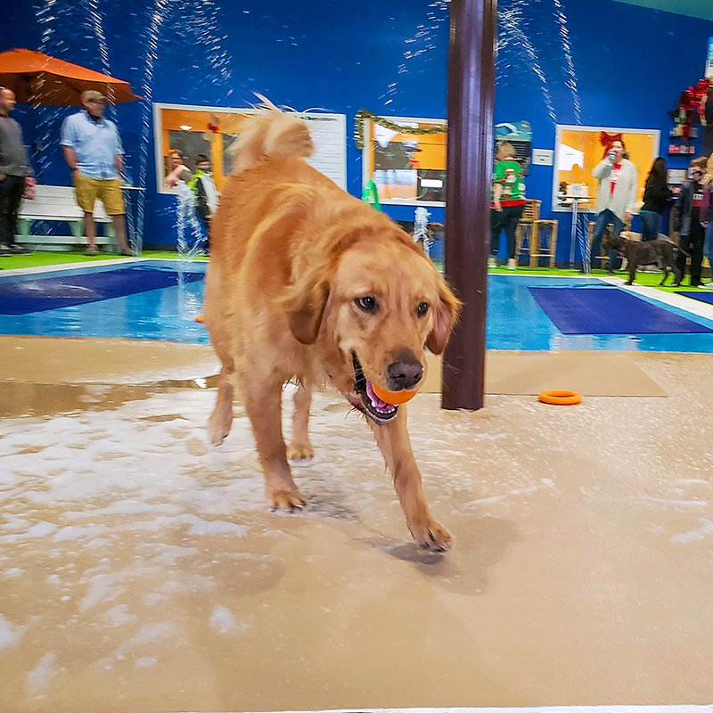 Epoxy Flooring for Sioux Falls Dog Park