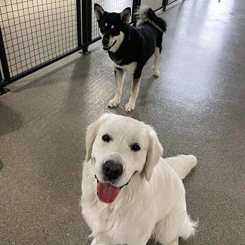 Flooring for dogs